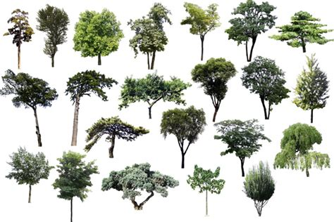 templates tree photoshop 15 23 plants bushes and psd templates images photoshop