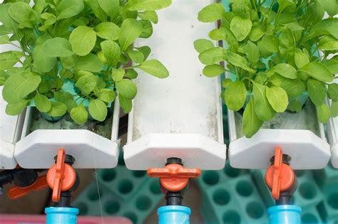 ebb  flow hydroponic systems