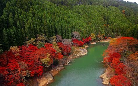 colorful trees fall river forest japan green leaves trees