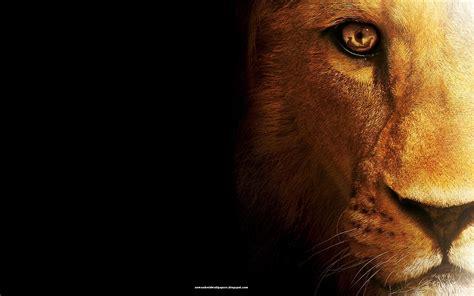 wallpaper mac lion hd lion in amazing style wallpapers hd for desktop mac