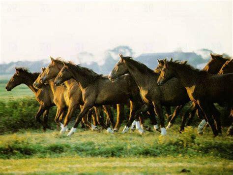 wallpaper for desktop running horse horse backgrounds wallpaper cave