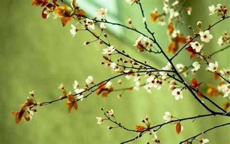image of spring flowers spring flowers spring wallpaper 22176435 fanpop