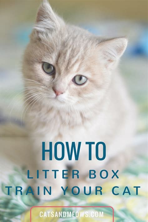 how to litter your how to litter box your cat we the answers cats and meows