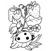 Free Printable Ladybug Coloring Pages For Kids
