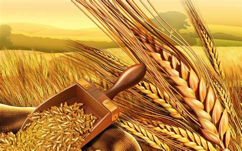 PSD Food illustrations 3118 wheat and wheatear Wallpapers