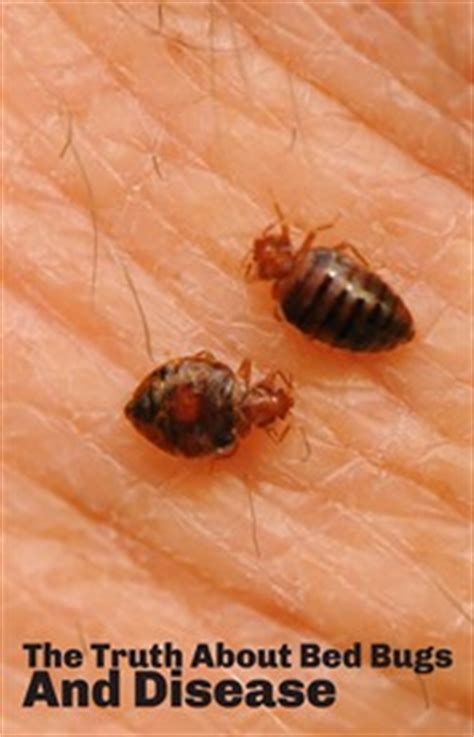the about bed bugs health 171 bug busters usa
