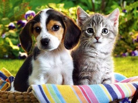 puppies and kittens together a house divided cannot stand cats and dogs living together