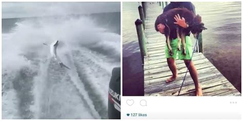 man drags shark behind boat alleged florida shark abuser in video posted other photos