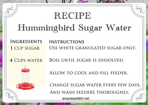 how to make hummingbird food choose a feeder empress