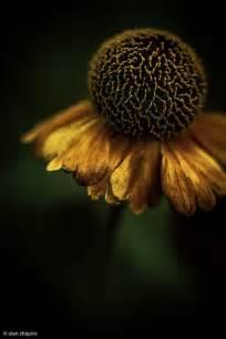 by alan shapiro photographers pinterest 54 best alan shapiro p h o t o g r a p h y images on