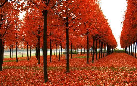 wallpaper autumn keren  cantik terbaru bangiz