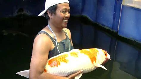 Joran Pancing Termahal Di Dunia Waow Ikan Koi Termahal Seharga 60 Juta