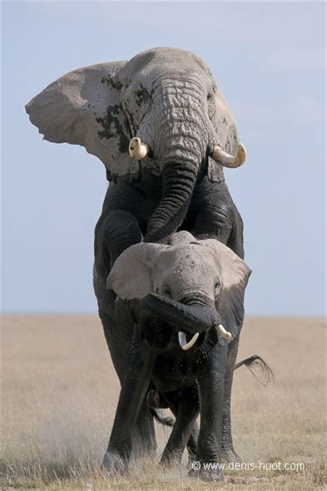 african animals mating videos 64 best mating in animal world images on pinterest