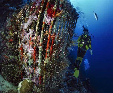 dive in sharm diving in sharm el sheikh sinai dive the world