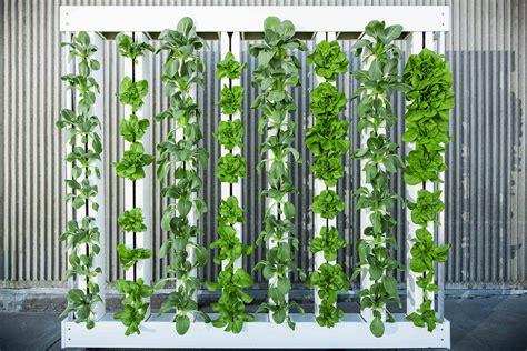 vertical farming continue  grow    hit