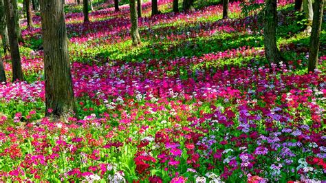 Images Flower Gardens Pink Flower Garden Wallpapers Http Refreshrose