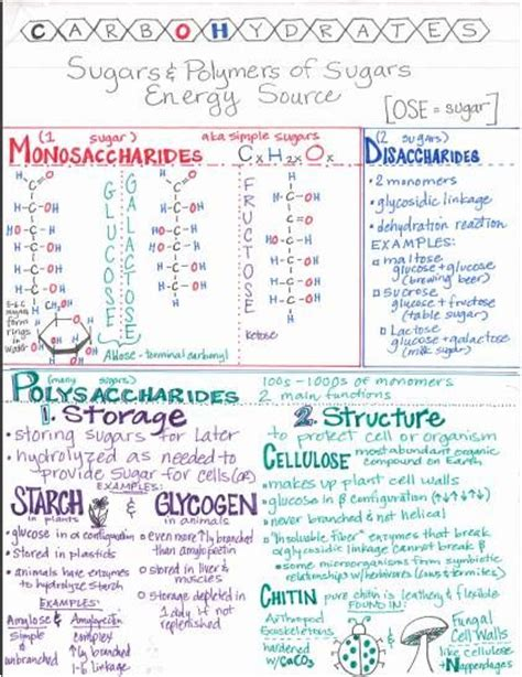carbohydrates notes pdf exploring science 7 summary sheets 7e exploring science