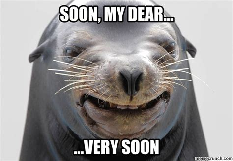 Seal Meme - soon seal meme