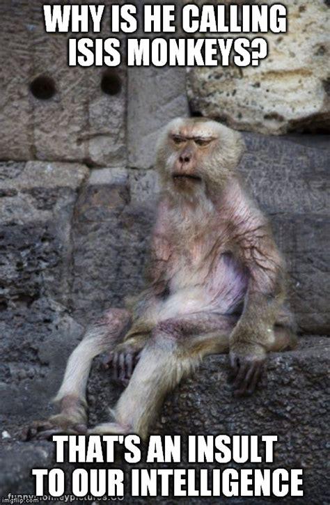 Monkey Meme Generator - monkey imgflip