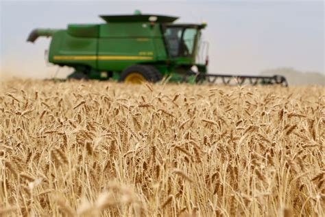 Good wheat crop hampered by low prices   Texas Farm Bureau