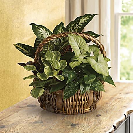 Emerald Garden Basket by Emerald Garden Basket Teleflora