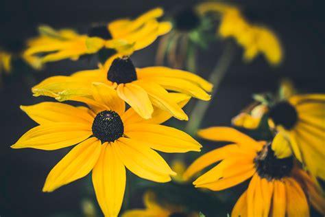 gambar wallpaper bunga matahari gudang wallpaper