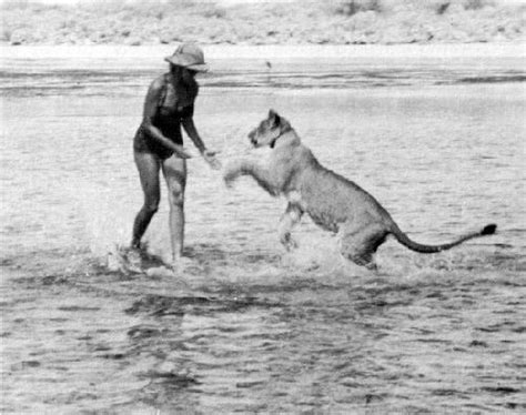 film elsa the lioness 91 best images about elsa joy and george adamson on