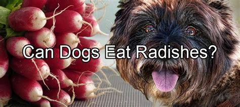 can dogs eat sweet peppers radishes pethority dogs