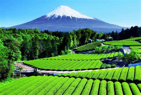 pemandangan gunung di indonesia dengan golden pengetahuan wisata gunung indonesia