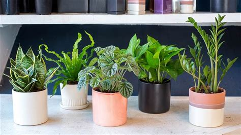 plants at home 11 plants for your bedroom to help you sleep better