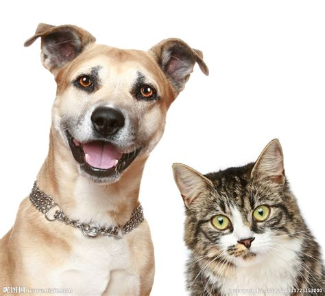E Para Adocao From The Adoptable Pets Photo Pool by 狗和猫摄影图 家禽家畜 生物世界 摄影图库 昵图网nipic