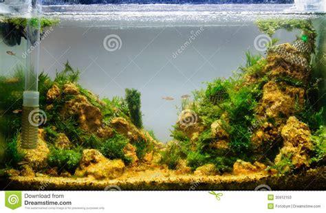 Aquascape Ideas Tropical by Aquascaping Of The Planted Aquarium Stock Image Image