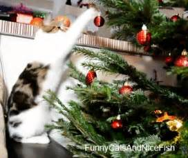 funny cats and nice fish merry christmas made from