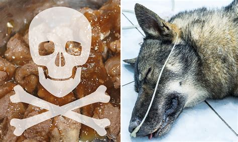 recalled dogs recall alert company recalls food after dies healing