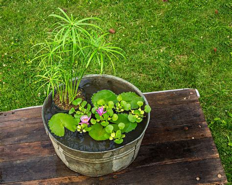 container water gardens how to plant a water container garden bigdiyideas