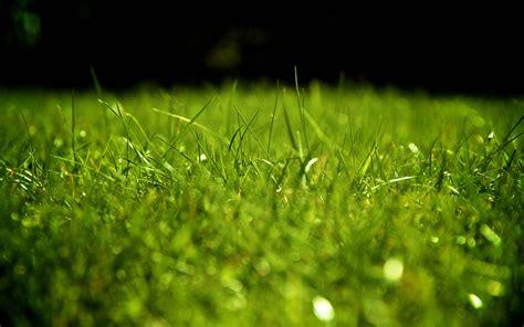 wallpaper background grass grass wallpaper