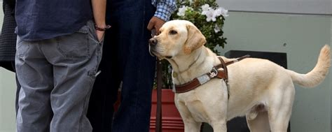 schools for service dogs learn how to become a trainer school for trainers usa school for