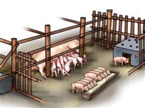 how to build stys house how to farm pigs housing the pig site