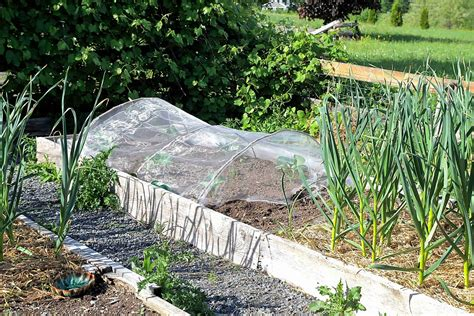 Awesome Cheap Insect Barrier For Gardens Walkerland Barrier For Vegetable Garden