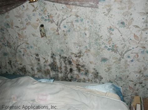Bedroom Wall Has Mould Myrtle Home Inspector Home Inspection Services