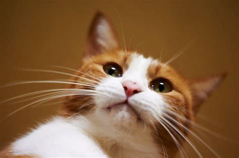 cat whiskers cat whiskers images search