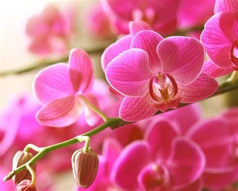Lu Hias Bentuk Anggrek Ungu kumpulan nama bunga lengkap dari a z beserta gambar dan penjelasannya bibit