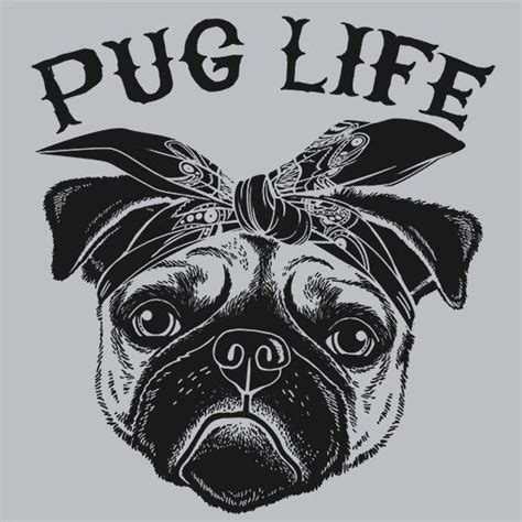 lifespan for pugs 25 best ideas about pug on pugs pug puppies and pug puppies