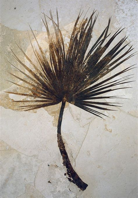 tropical plant fossils what s the earth has been earth earthsky