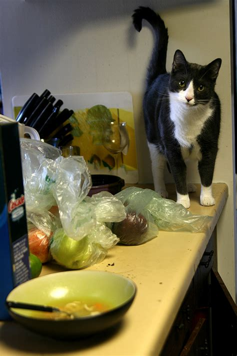 How To Keep Cat by How To Keep Your Cats The Kitchen Counter Catster
