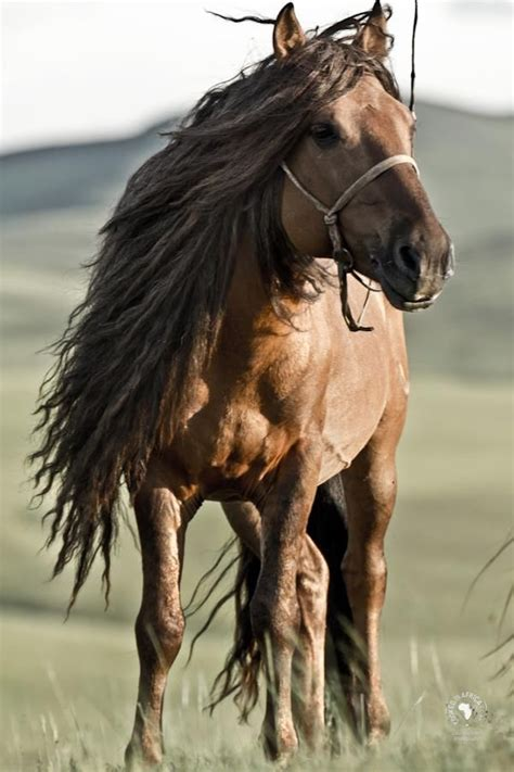nice hourse 55 best images about favourite horse photos on pinterest