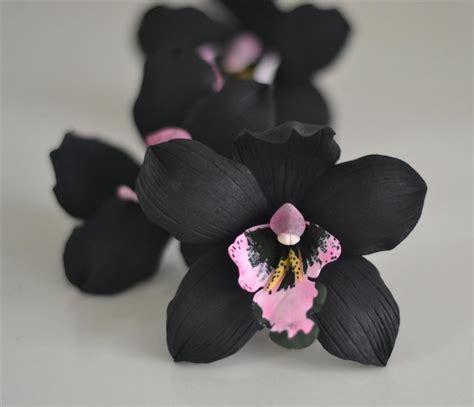 imagenes orquideas negras orqu 237 dea negra una planta 250 nica