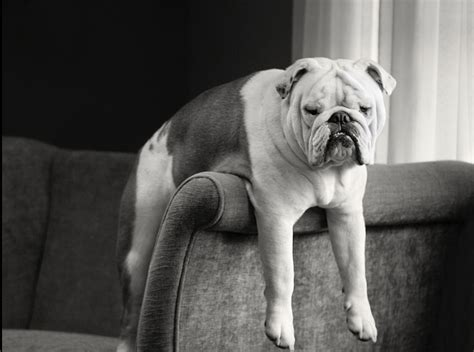 Popular Apartment Pets In The 187 The 10 Best Dogs For Apartment Living