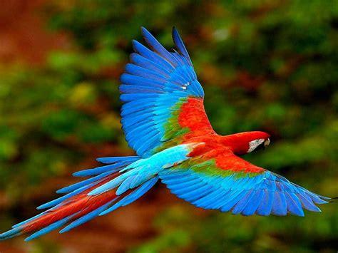 Imagenes De Animales De Mexico | d 243 nde ver animales en peligro de extinci 243 n en m 233 xico