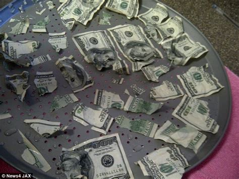100 Bill On The Floor - bad family s pet eats 1000 in and pukes